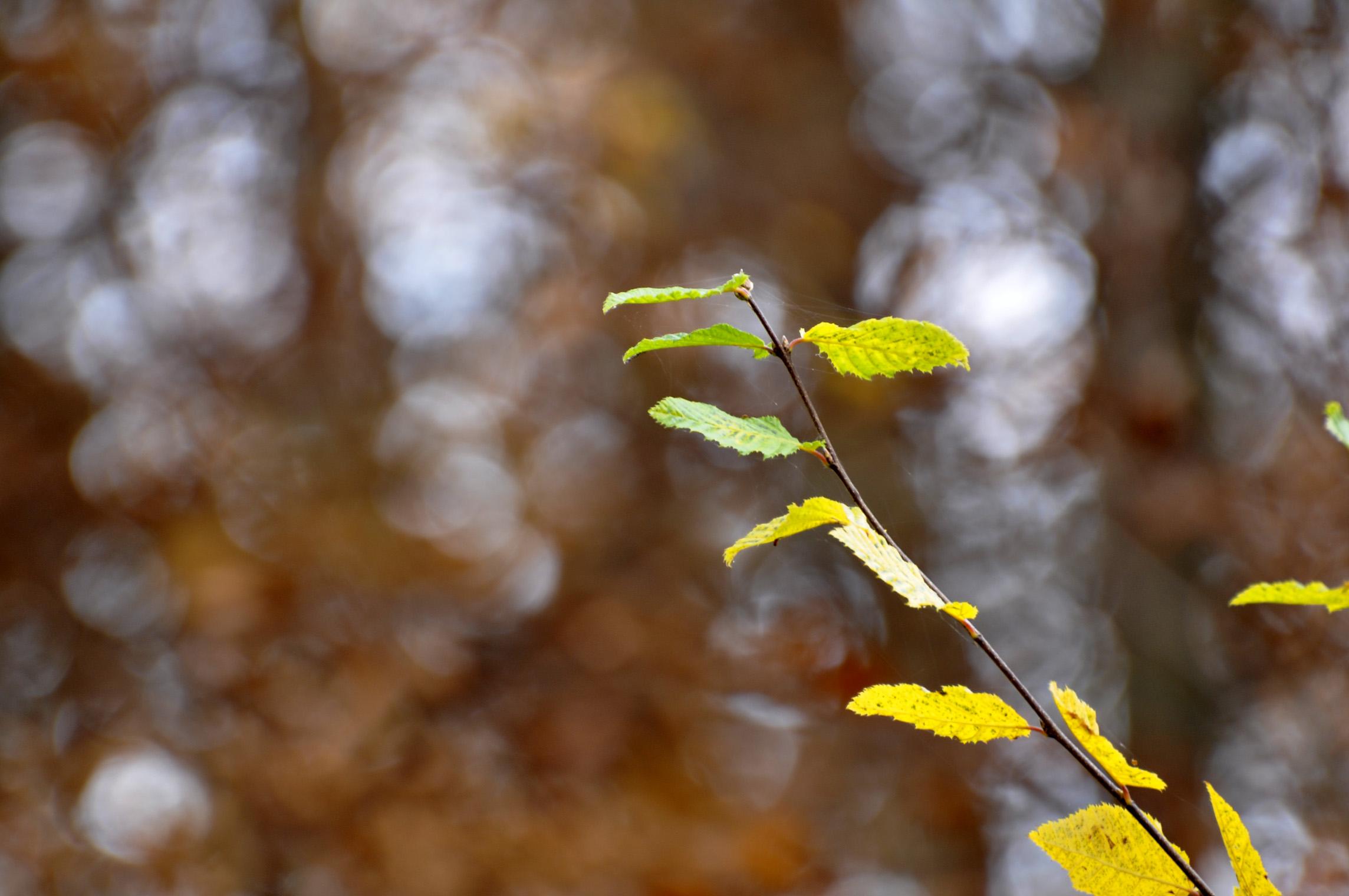 Herbst 2011 | Foto: Martin Krauß