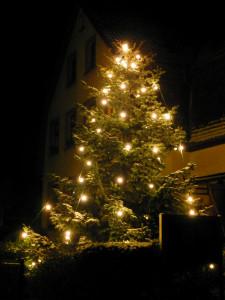 Weihnachtsbaum oder auch Christbaum genannt | Foto: Martin Krauß