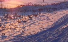 Winter: Spuren im Schnee | Foto: Martin Krauß
