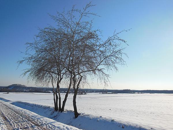 Eine verschneite Winterlandschaft mit drei Bäumen.