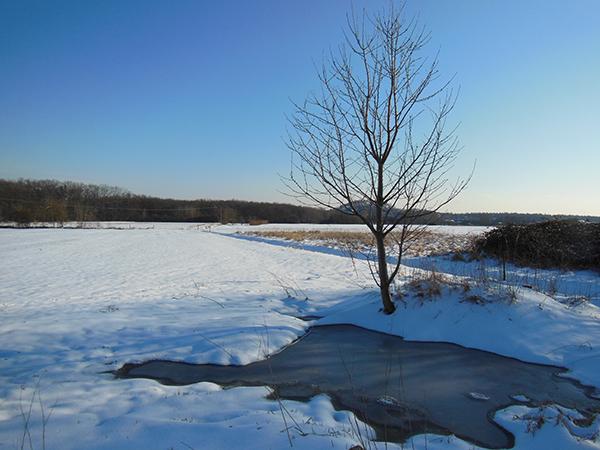 Eine Winterlandschaft mit einem zugefrorenen See und einem kahlen Baum im Hintergrund