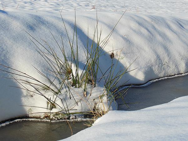 Ein zugefrorener Bachlauf mit einigen Gräsern und schneebedeckten Säumen