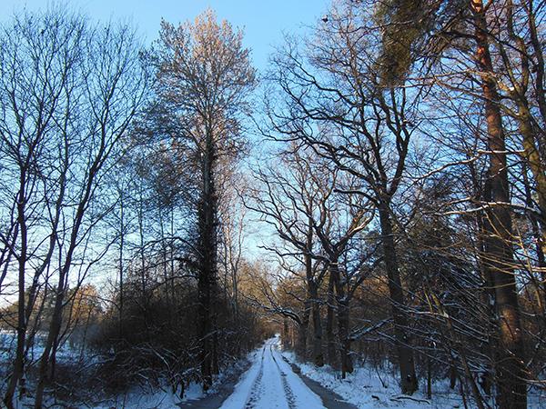 Ein verschneiter Waldweg, der rechts und links von kahlen Bäumen gesäumt wird