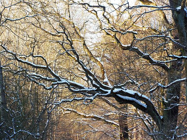 Die verzweigten Äste eines kahlen Baumes sind mit Schnee bedeckt.