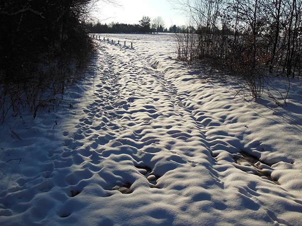 Ein Feldweg ist mit Schnee bedeckt. Ihn säumt kahles Gebüsch.