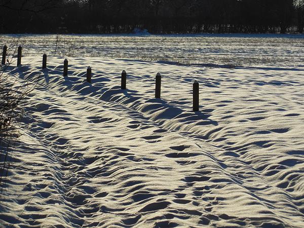 Auf einem schneebedeckten Feld stehen kleine Pfähle. Der Schnee glitzert im Licht der Sonne.